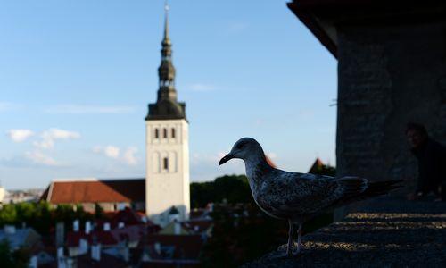 Estija – ne mažesnė pinigų plovykla, nei Latvija
