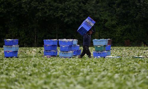 """JK ūkininkai reikalauja užtikrinti ES piliečių įdarbinimą po """"Brexit"""""""