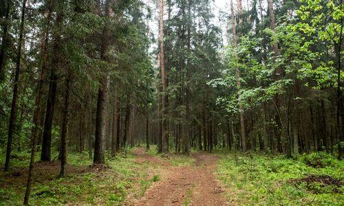 Ne vienplytos – į miškų fondą lietuviai investavo dar 10 mln. Eur