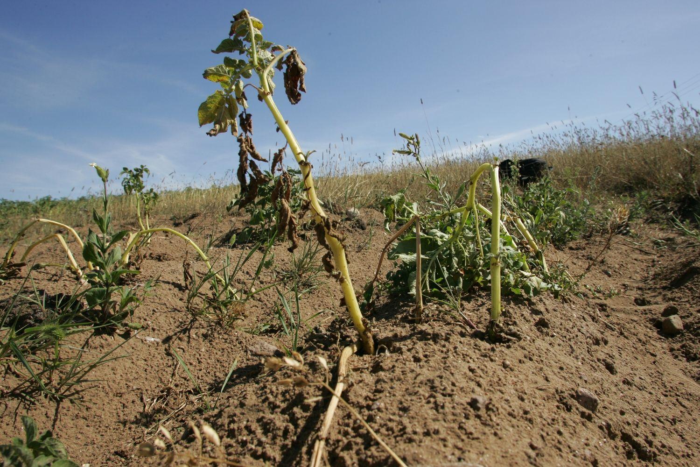 Ar lyja, ar saulė šviečia – ūkininkams vis blogai