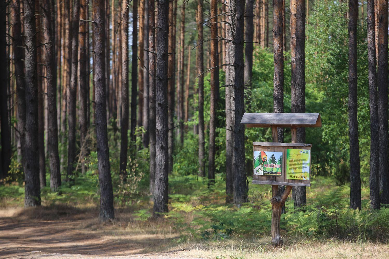Valstybinių miškų urėdija kratosi tarnybinių butų