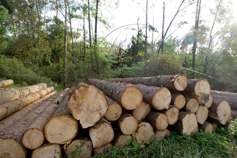 Valstybinių miškų urėdija augina pajamas