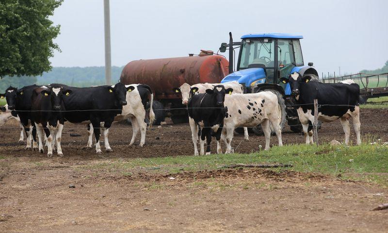 Pagal Lietuvos kaimo plėtros 2014–2020 m. programą NMA inicijavo 22 jaunųjų ūkininkų paramos prašančių pareiškėjų patikrinimus. Vladimiro Ivanovo (VŽ) nuotr.
