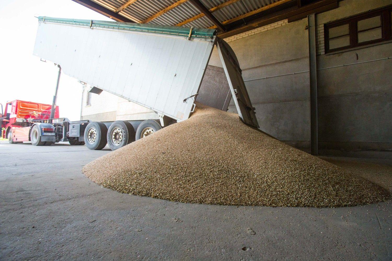 """""""KG Group"""" prognozuoja 20% mažesnį ir prastesnės kokybės grūdų derlių"""