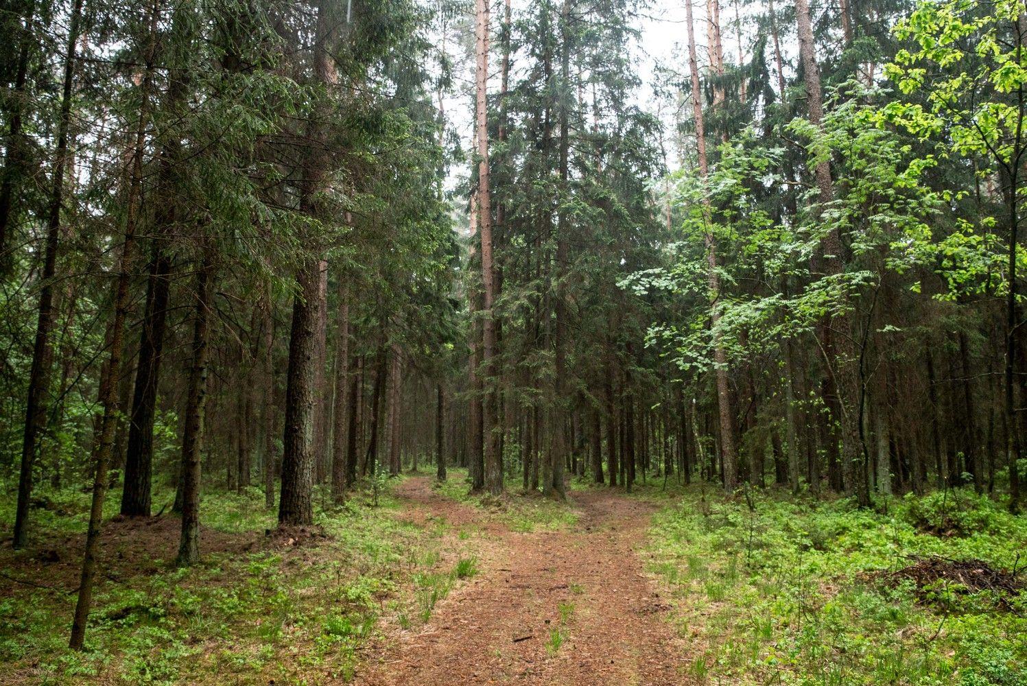 Miškų bus galima iškirsti kiek daugiau