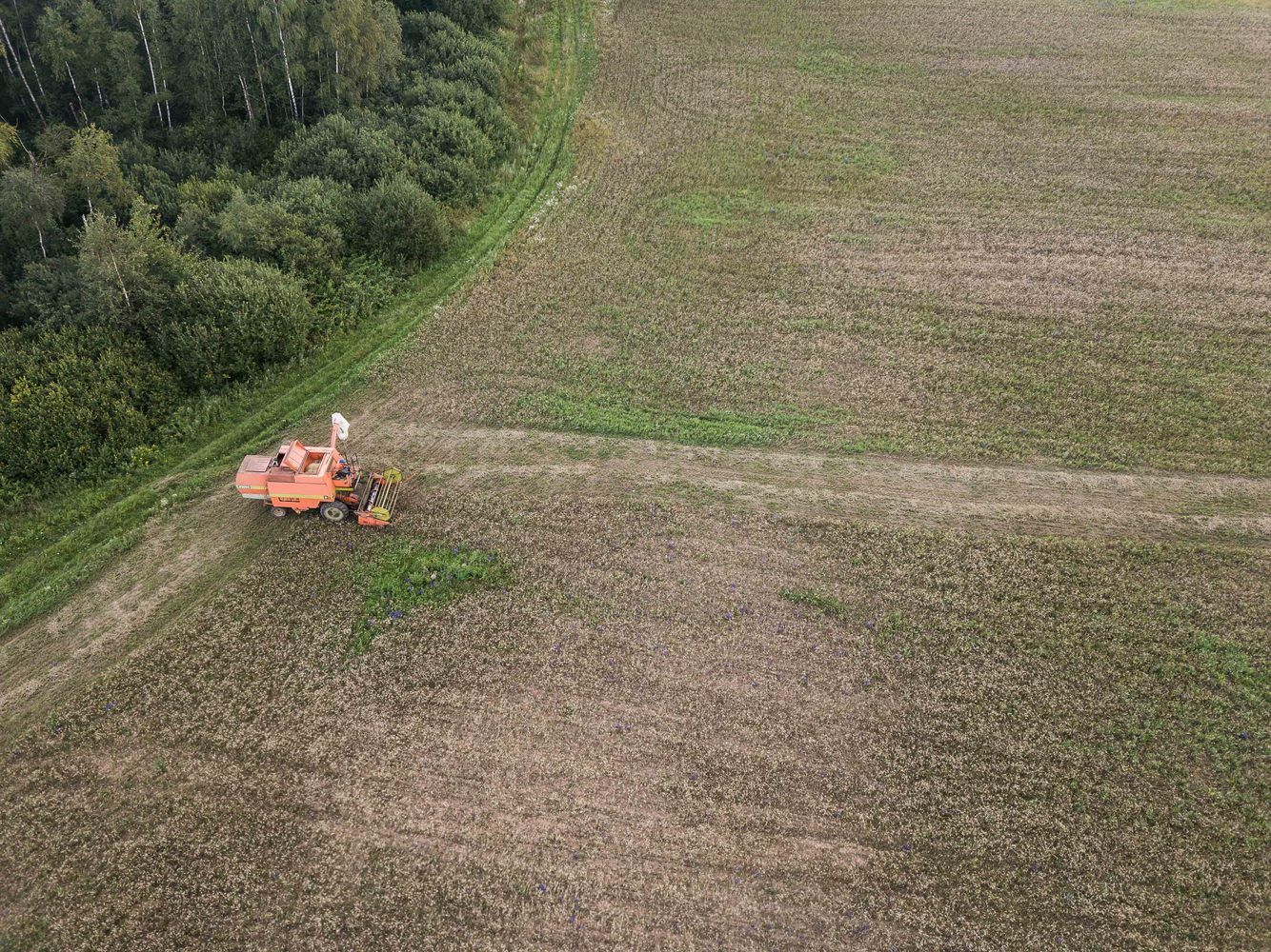 EK prognozės Lietuvai dėl kviečių derliaus – kur kas pozityvesnės