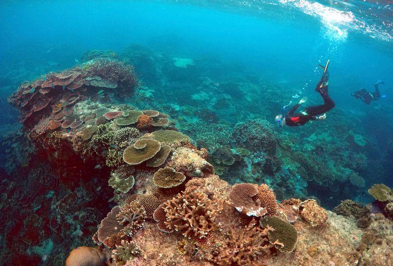 """Pasaulio vandenynuose nykstant koraliniams rifams, mokslininkai sugalvoja netikėtų būdų jiems gelbėti.l Davido Gray (""""Reuters""""/""""Scanpix"""") nuotr."""