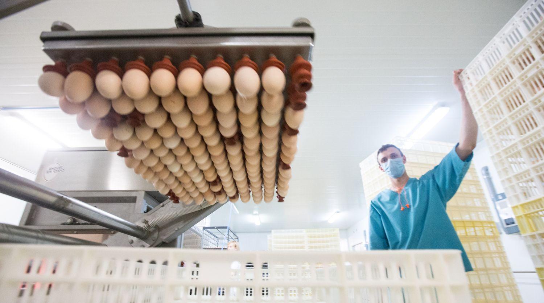 Reikalaujama griežtesnio kiaušinių iš Ukrainos ženklinimo – pirkėjai klaidinami