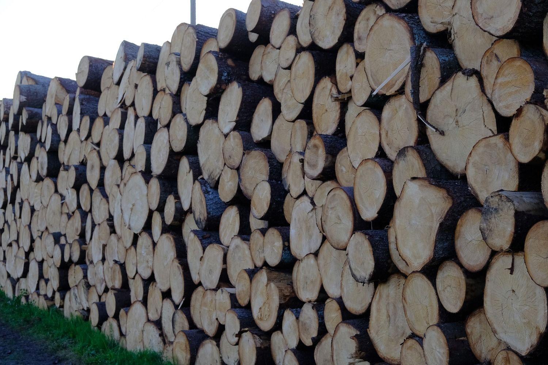 Eksportuojamą medienos žaliavą siūloma apmokestinti 15%