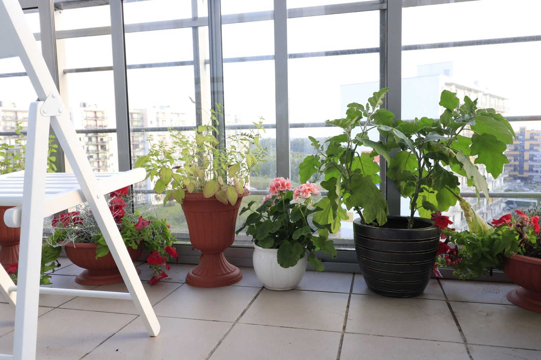 Hobis: keli augalai balkone gali tapti emocine atgaiva