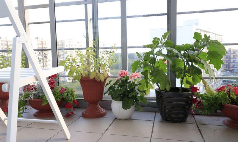 Augalai suteikia daug grožio ne tik balkonui, bet ir visam butui. Agnės Barauskienės nuotr.
