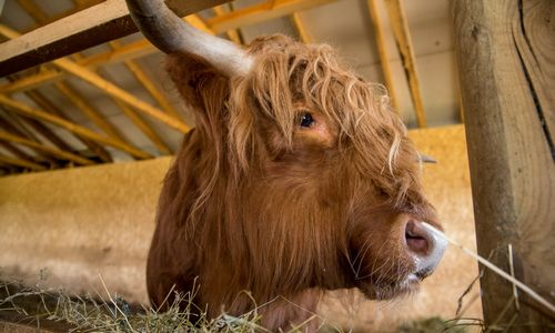Naikinama Valstybinė gyvulių veislininkystės priežiūros tarnyba