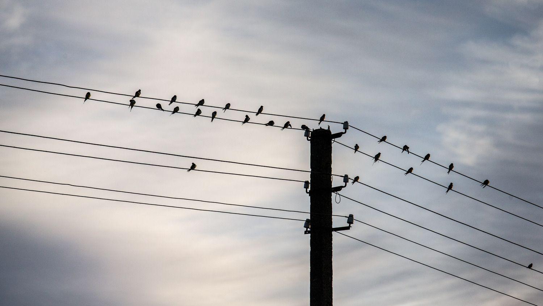 Prognozuojama elektros rinkos kaina– penktadaliu didesnė