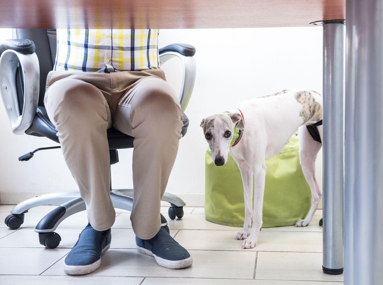 Kaip pradėti motyvuoti savo darbuotojus: 3 esminiai žingsniai