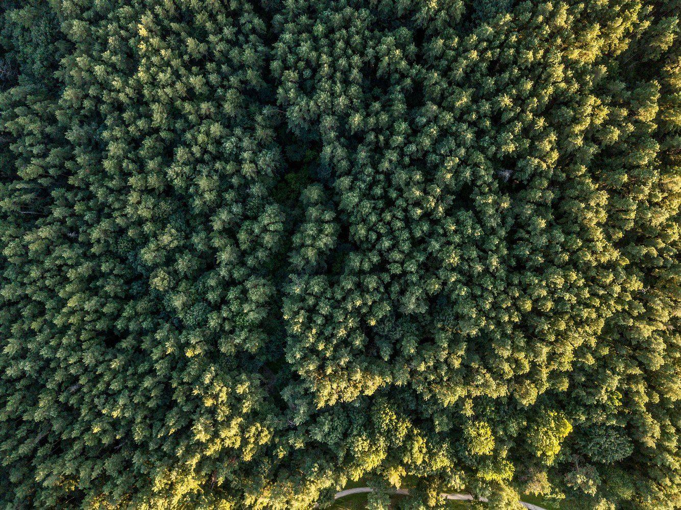 Per 9 mėn. valstybinės medienos parduota mažiau, bet gauta 10% daugiau pajamų