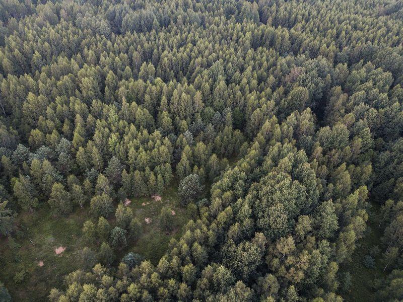 Spalį fiksuotas vienas sandoris, kuriuo buvo parduota daugiau nei 100 žemės sklypų, daugiausia miško paskirties. Vladimiro Ivanovo (VŽ) nuotr.