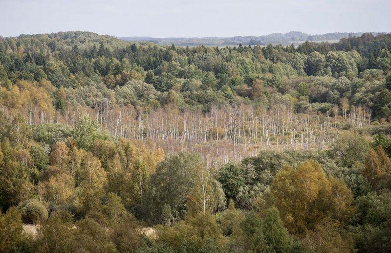 Ekspertai sako, kad Lietuvos miškams reikalingas  intensyvesnis tvarkymas Juditos Grigelytės (VŽ) nuotr.