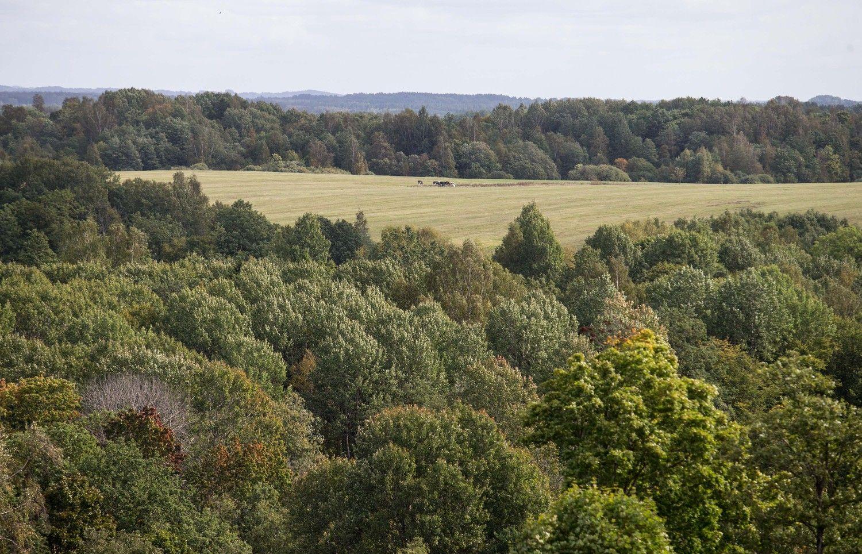 Miškingose savivaldybėse leista kirsti medžius ir statyti namus