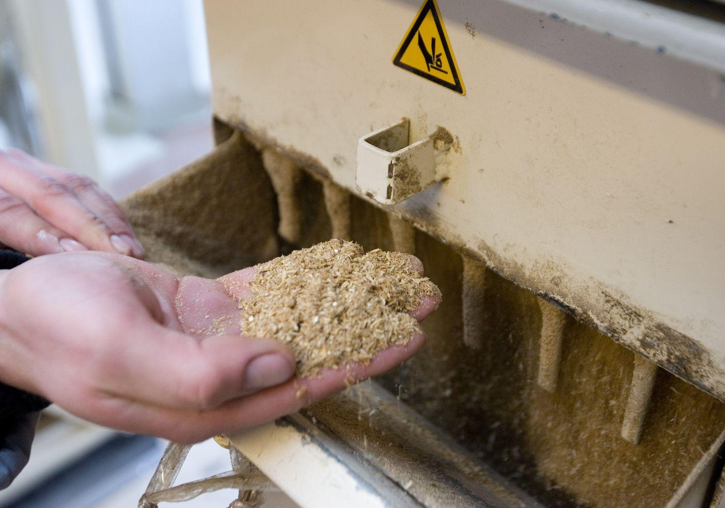 Toliau mažėja lietuviškų grūdų eksporto apimtys