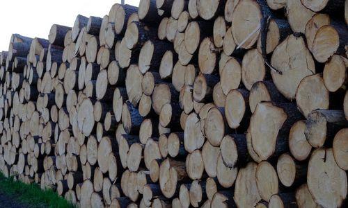 """Teismo prašoma uždrausti kirsti miškus """"Natura 2000"""" teritorijose"""