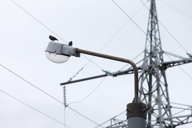 Elektros kaina gyventojams nuo sausio kils 1,7 cento