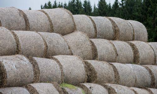 Seimas nebenori tirti padėties žemės ūkio sektoriuje