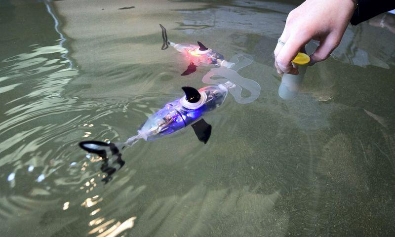 """Vien robotikos centrams kurti ir plėsti žadama 66 mln Eur. Nuotraukoje – žuvys robotai """"Innorobo"""" parodoje Prancūzijoje. Robert'o Pratta (""""Scanpix"""" / """"Reuters"""") nuotr."""