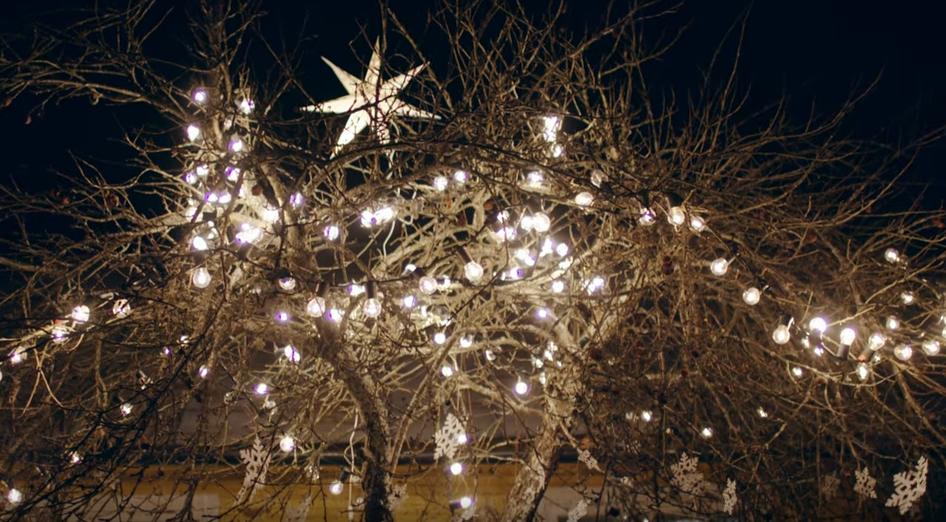 """Šiaurinė Kalėdų žvaigždė su """"Luminor"""""""