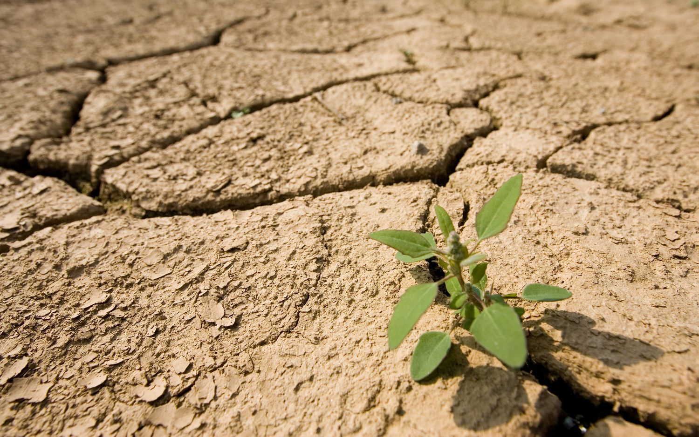 Atšaukta ekstremali padėtis dėl sausros