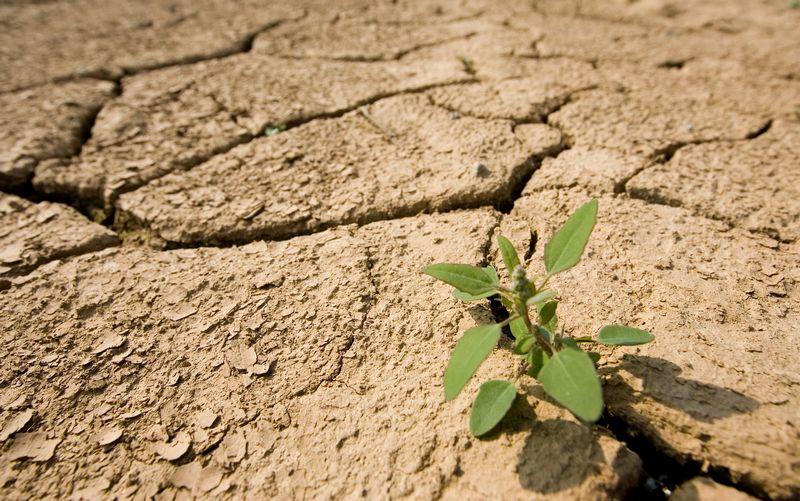 Sausra žemės ūkiui galėjo padaryti kelių šimtų milijonų eurų nuostolių. Juditos Grigelytės (VŽ) nuotr.
