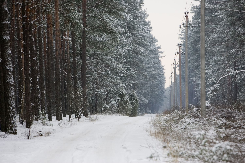 Vietoj turėtos žemės gyventojai galės prašyti kompensacijos mišku