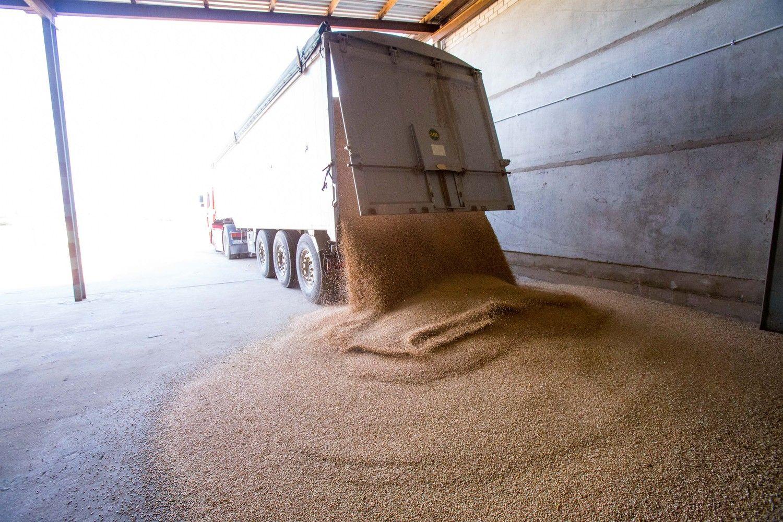 Sutrikus JAV žemės ūkio departamento veiklai, grūdininkai liko nežinioje
