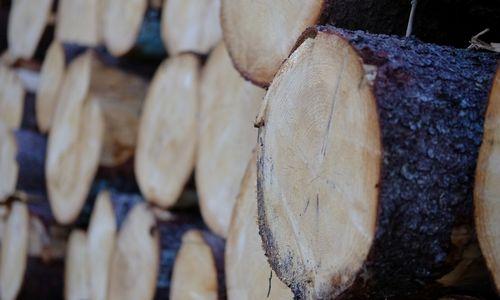 Suomija importavo 30% daugiau medienos, gaminių eksportas išaugo 5%