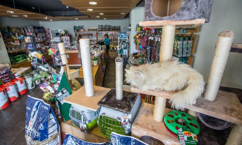 Didžiąją veterinarijos vaistinių asortimento dalį sudaro smulkiems augintiniams skirtos prekės. Juditos Grigelytės (VŽ) nuotr.