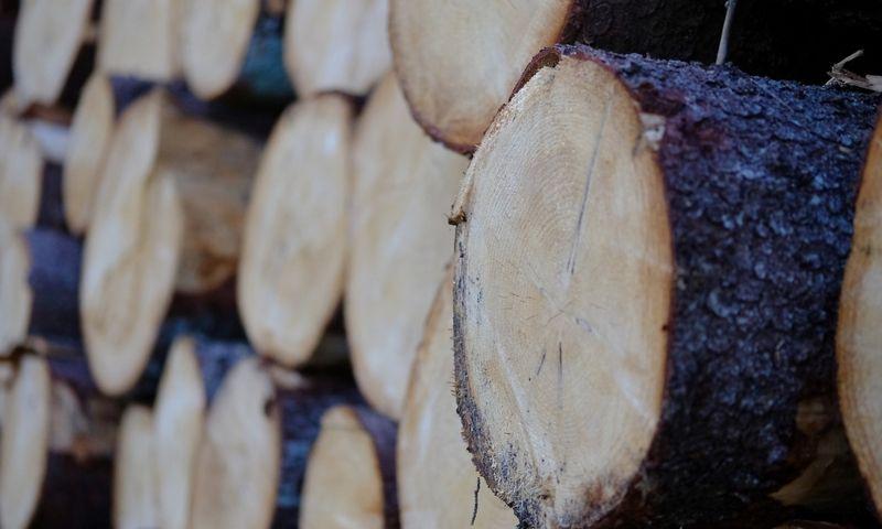 Aplinkos ministerija siūlys apriboti plynuosius miško kirtimus ir jų plotus saugotinose buveinėse,. Vladimiro Ivanovo (VŽ) nuotr.