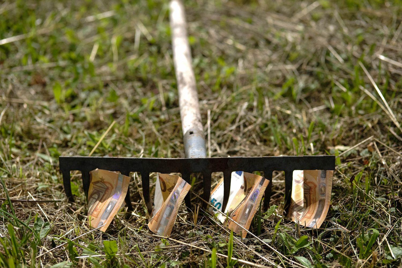 Stambi žemvaldė: derlingiausia žemė per penkmetį pabrango iki 3,6 karto