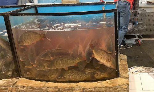 Prekybos tinklus ragina nustoti prekiauti gyvomis žuvimis
