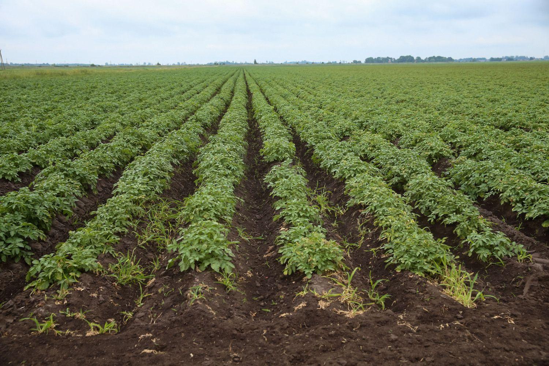 STT perspėja dėl korupcijos rizikos sertifikuojant ekologinius ūkius
