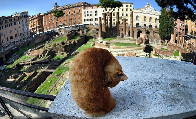 """Romoje esanti Argentinos bokštų aikštė, kurioje yra tiksli Romos diktatoriaus Julijaus Cezario nužudymo vieta. Gabriel Bouys (AFP/""""Scanpix"""" nuotr.)"""