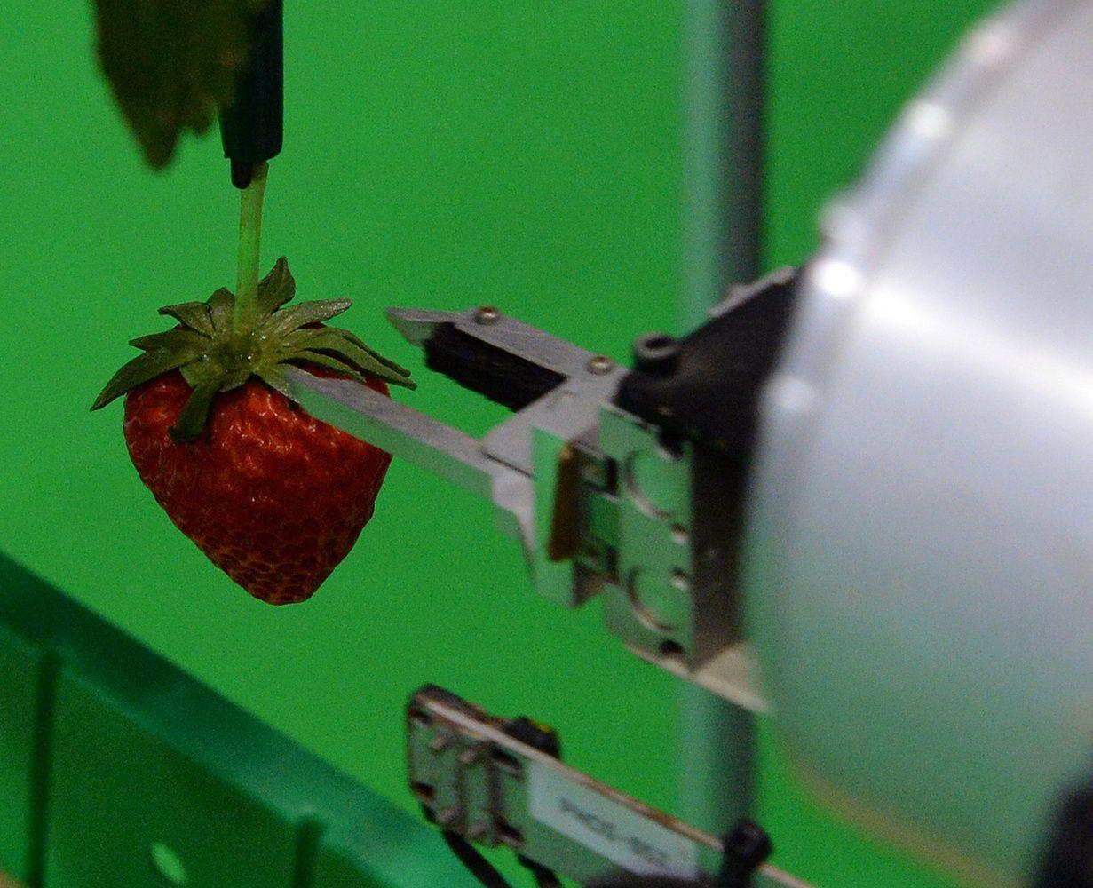 """""""Agtech"""": investuotojai nusitaikė į žemės ūkio startuolius"""