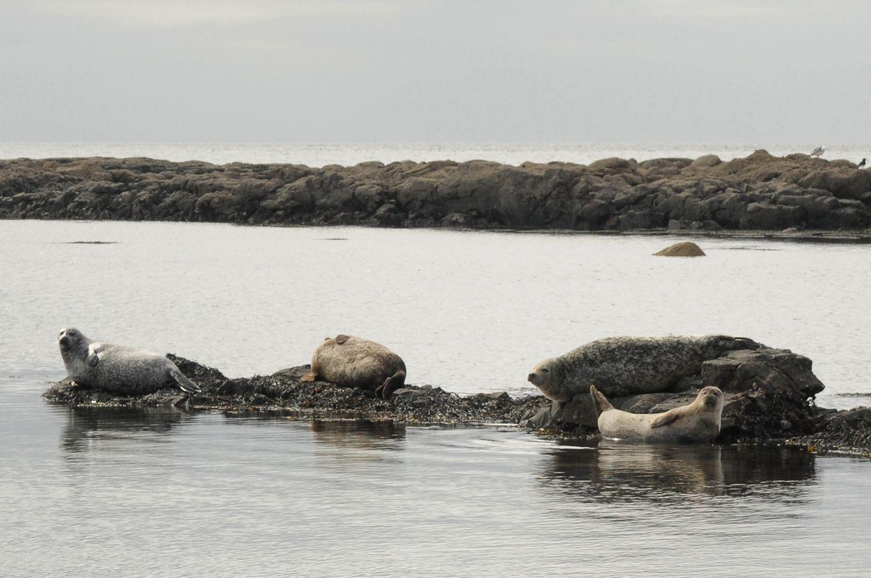 Magadane pradėta gaminti dešra iš ruonių