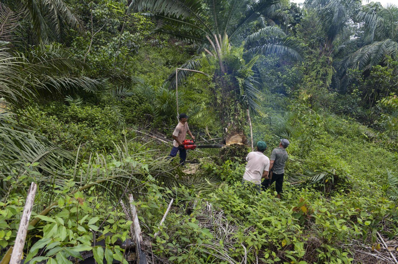 Dėl palmių aliejaus ES grasinama prekybos karu