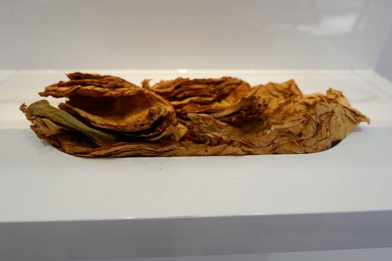 Neapdoroto tabako lapai. Gabijos Sabaliauskaitės (VŽ) nuotr.