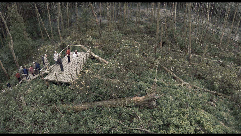 """Einame į kiną: """"Rūgštus miškas"""""""