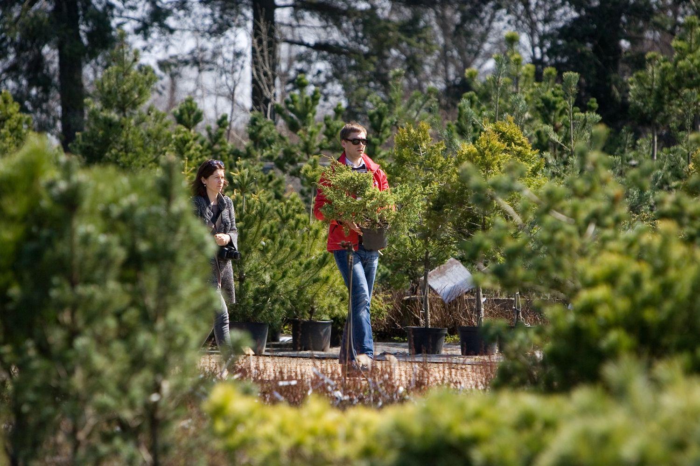 Nusivylę augalais, kurie neprigyja, pirkėjai kokybės ieškomedelynuose