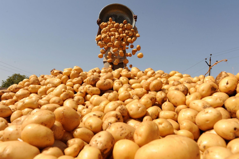 """""""PepsiCo"""" padavė į teismą Indijos ūkininkus: augindami bulves pažeidė autorių teises"""