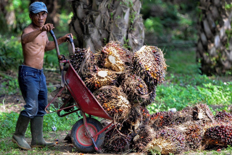 Jei bus uždraustas palmių aliejus, Malaizija ruošiasi prekybos karui su ES