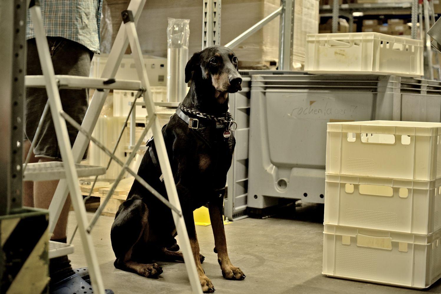 """Pirmoji """"Marks & Spencer"""" fondo investicija – į maistą šunims gaminantį lietuvių startuolį"""