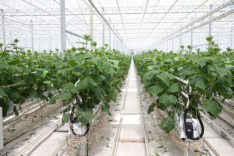 JAVdėl prekybos karo nuostolių ūkininkams skirs 16 mlrd. USD paramos