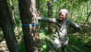 Kaip išvengti viražų konsoliduojant miško sklypus?